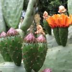 Foto de flor de cactus