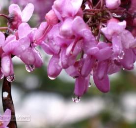 Foto de flor y rocio