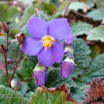 Foto de flor violeta