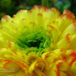 Foto de flor amarilla