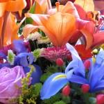 Foto de flores de color 1