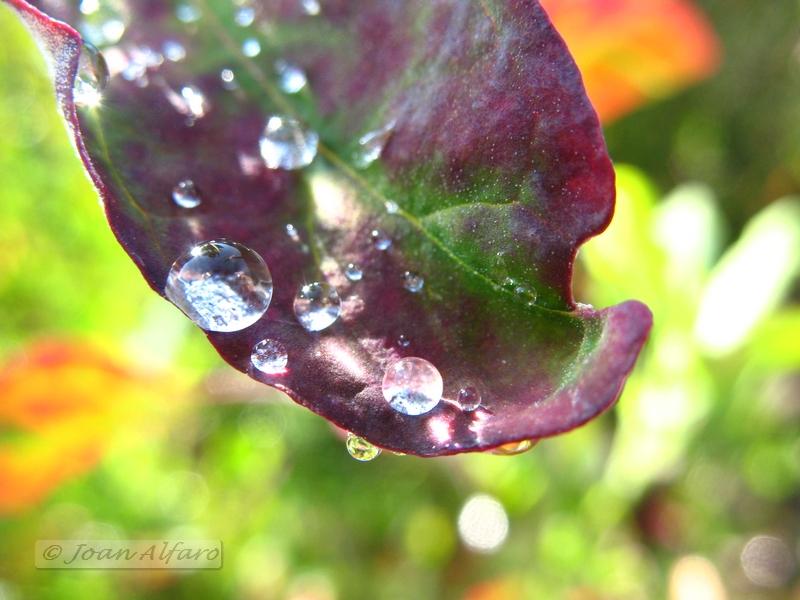 Foto de gotas de agua 1