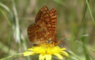 Foto de mariposa sobre Flor