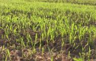 Foto de campo verde