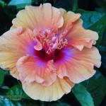 Foto de flor abriendo el corazón