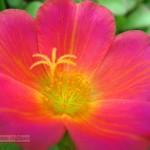 Foto de flor en tonos cálidos