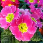 Foto de flor amarilla y purpura