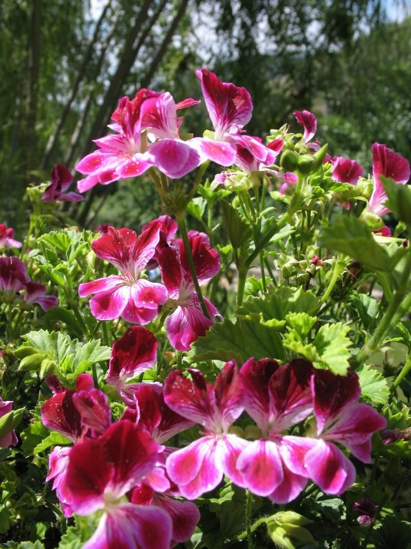 Flores Al sol