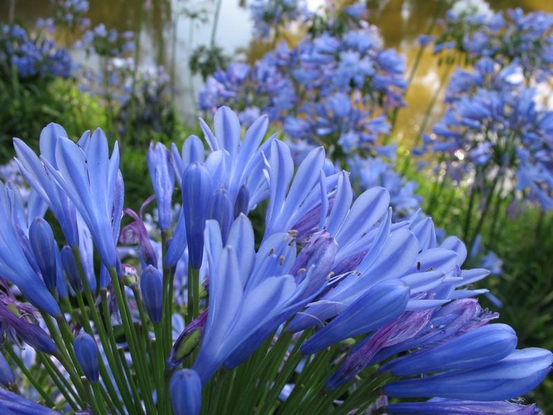Foto de Gama de azules