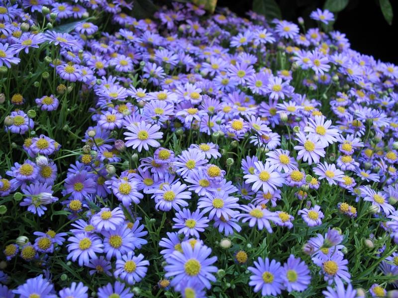 Tapizado de flores